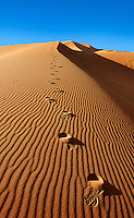 Foot steps in the Sahara sand dunes of erg Chebbi, Morocco, Africa