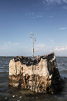 Indonesia - Sumatra - Aceh - Outskirts of Rigaih - Dead trees partly covered by the high tide. Before the tsunami this area was occupied by a village but the tsunami has permantly submerged 200 m of land and the high tide keeps eroding another few hundreds.