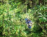 Rwanda Scenes