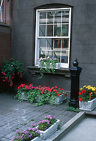 Courtyard container garden, urban city scene, with windowboxes of annual flowers impatiens, ageratum, marigolds, geranium Pelargonium, fuchsia, ivy. Brick patio and old hitching post ornament, stone building formal design house with 8 over 8 window
