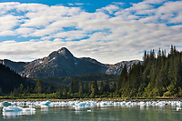 Icebergs from Nellie Juan glacier stranded along the shores of Prince William Sound, Chugach National Forest, Kenai Peninsula, southcentral, Alaska.
