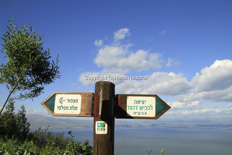 Israel, Lower Galilee, Switzerland forest overlooking the Sea of Galilee