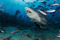 miscellaneous shark photos
