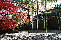 Beautiful Japanese garden of autumn scenery. Outdoor stock images by Paul Chong.