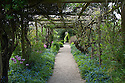 Wisteria tunnel underplanted with spring flowers in the walled garden, Rousham House and Garden, mid May.