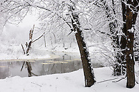 An early spring snow storm along Sand Creek in Louisville Swamp unit of the Minnesota Valley National Wildlife Refuge covers the landscape in a blanket of heavy wet snow. The Minnesota Valley National Wildlife Refuge is located within the urban and suburban areas of Minneapolis and St. Paul. It is a green belt of large marsh areas totaling approximately 14,000 acres, spanning 99 miles of the Minnesota River. This is one of only four American national wildlife refuges in an urban area, and the largest.