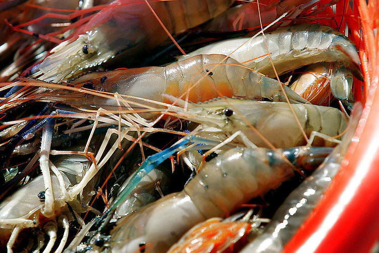 Both the yield and demand for their prawns have the Ipocks, and seven other aquaculture farmers now growing prawn in the state, feeling the promise of profitability from the crop that goes for $8 to $12 per pound.