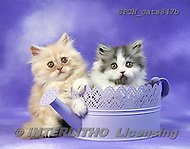 Animals - cats photos