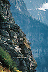 WILDLIFE / Mountain Goat Photography
