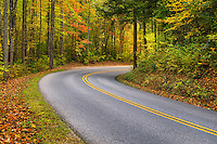 Vibrant fall foliage lines the road along the Little River, Smoky Mountains.