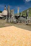 Corn drying near megaliths, Bena Village, Bajawa, Flores