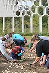 Foto: VidiPhoto<br /> <br /> VLEUTEN &ndash; Tientallen vrijwilligers hebben zaterdag langs de ecologische parkpergola in het Maximapark in Vleuten geholpen met het planten van 200.000 bloembollen. Het bollenmengsel van zes verschillende soorten die bloeien van februari tot en met juni, moet een bijvriendelijk biotoop cre&euml;ren. Bijen en vlinders krijgen zo al vroeg in het voorjaar voedsel aangeboden. Het gaat hier om een van de grootste bijenbollenprojecten van Nederland. Wethouder Kees Geldof van de gemeente Utrecht plantte zaterdag de eerste bol. Het bijzondere bollenmengsel met onder andere krokussen, blauwe druifjes en anemonen is samengesteld door bollenleverancier Jac. Uittenbogaard &amp; Zonen uit Noordwijkerhout in overleg met de Nederlandse Bijenvereniging (NBV).