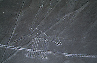 Aerials of the Nazca lines include animals.  The lines which are only visible from the air and form perfect geometric designs such as triangles and rectangles and straight lines running for several kilometers across the desert. The most popular thought is that they were made by the Nazca and Paracas cultures during the period between 900 .BC and 600 AD.