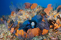 QT0139-D. scuba diver (model released) looking through reef &quot;window&quot; surrounded by sea fans (Pacifigorgia sp.) and gorgonians. ). Baja, Mexico, Sea of Cortez, Pacific Ocean.<br /> Photo Copyright &copy; Brandon Cole. All rights reserved worldwide.  www.brandoncole.com