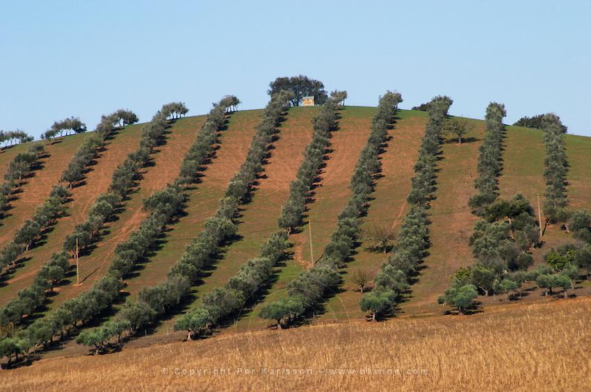 olive grove alentejo portugal