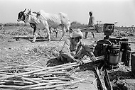 1970, Punjab, India --- Farmers press sugar cane in the Punjab region of India. --- Image by © JP Laffont