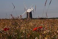 Burnham Overy Staithe, Norfolk, England, 08/08/2009..Poppy field and Burnham Overy Staithe windmill.