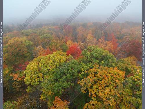 Aerial view fall nature scenery of colorful autumn trees in fog at Dorset, Muskoka, Ontario, Canada.