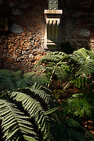 Plant History Glasshouse (formerly Australian Glasshouse), 1830s, Rohault de Fleury, Jardin des Plantes, Museum National d'Histoire Naturelle, Paris, France. Detail of cyatheales plants in the afternoon light, with a wall bracket at the base of a metal girder in the background.
