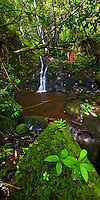 A remote waterfall in the Manoa Valley on Oahu