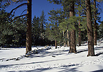 Long Valley in the San Jacinto Mountains
