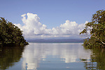 Central America, Costa Rica, Golfo Dulce. Tranquil water scene of marshes on the Golfo Dulce.