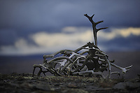 Autumn Forollhogna national park,Norway Wild reindeer  horns,Forollhogna,Norway Home decor, Trond Are Berge Landscape, landskap,