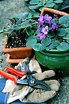 Potting delicate purple violets