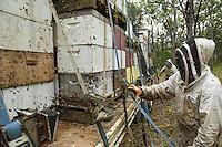 Preparations for the transhumance. Since ten years ago, beekeeping in Australia has become mechanized and the hives are set up on pallets to be loaded with the help of a forklift.///Préparation à la transhumance. Depuis dix ans l'apiculture s'est mécanisée en Australie et les ruches sont aujourd'hui installées sur des palettes pour être chargées à l'aide de fenwick.