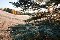 A frosty field and fall color in Michigans Upper Peninsula.