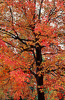 Autumn Fall Foliage Stock Images