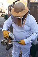 A beekeeper lights a smoker, used to calm the bees before he opens the hive box.