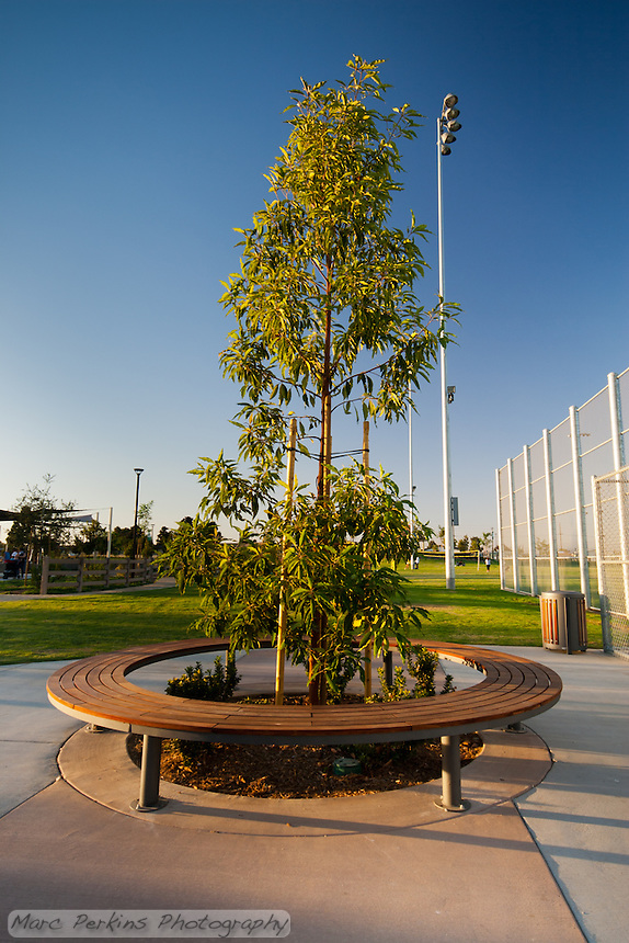 A circular wooden bench surrounding a tree near the baseball field at Stanton Central Park.