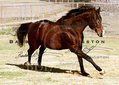 Houston, at Getaway Farms near Romoland, California.  January 2004...© 2004 Barbara D. Livingston. All rights reserved. easygoer78@aol.com