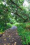 The short hike through the forest to th Oheo Gulch, Haleakala National Park, Maui, Hawaii