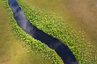 Rewilding Europe/Greater Laponia, Sweden