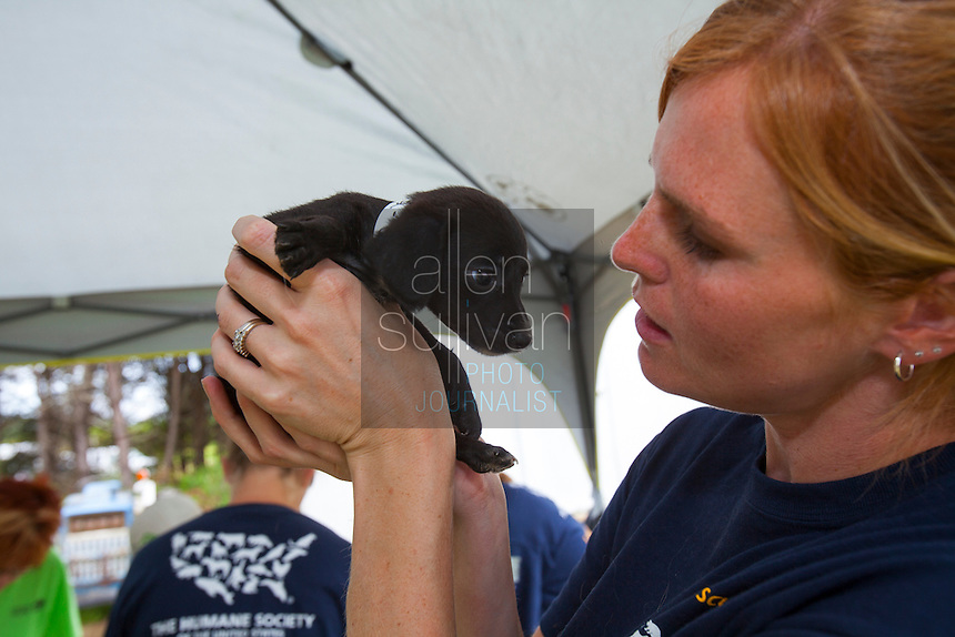 Kimberly Kelly, South Carolina state director for The HSUS, with a puppy during a raid on a puppy mill in Johnston, SC on Tuesday, Sept. 11, 2012. HSUS workers found over 200 dogs, nine horses and 30-40 fowl.