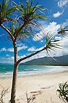 View of Myall Beach.  Cape Tribulation, Daintree National Park, Queensland, Australia