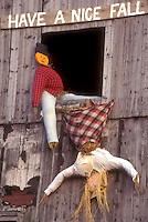 "AJ5716, fall decoration, display, decorations, autumn, """"Have a Nice Fall"""" A fall decoration of two scarecrows in a barn window (one is upside down falling out) in Danville in Caledonia County in the state of Vermont."