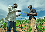 George Mwakihana (left), a Malawi government agricultural extension agent, talks with James Kumwenda, who farms corn, cassava and tobacco on a small farm in the village of Dofu, which is located in an area of northern Malawi that has been hit hard by drought and hunger. Mwakihana is working closely with the ACT Alliance to help Kumwenda and other residents of the community discover new ways to grow more food, thus achieving food security for their families.