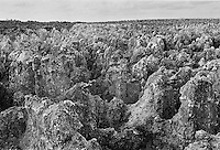 Worked out phosphate (fertiliser) fields of bird guano organic waste on the island of Nauru in the South Pacific