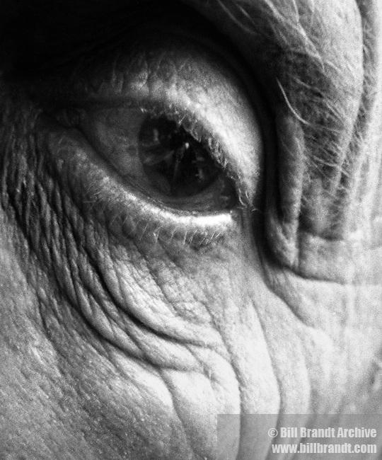 Jean Arp eye, 1960