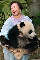 A Chinese tourist holds a year-old panda cub, at the Chengdu Giant Panda Research and Breeding Institute.