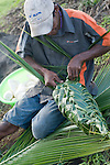 Paradise Taveuni Resort, Taveuni, Fiji; food is tightly wrapped in palm fronds to be cooked over hot rocks at the Fiji Night Lovo