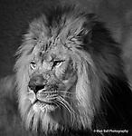 Memphis Zoo 2014