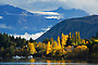 Autumn poplar trees & mountains - Lake Wanaka, New Zealand