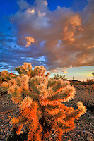 Cholla Sunset - Arizona - McDowell Mountains, Scottsdale - cactus and clouds.<br />