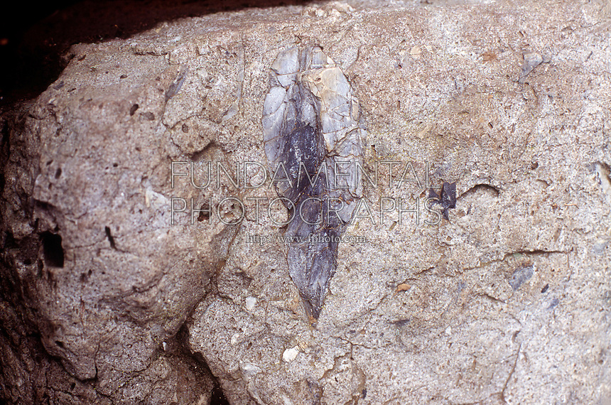 SEDIMENTARY ROCK<br /> Chert, Found In Nodules Of Limestone<br /> It probably formed from the remains of ancient sea sponges or other ocean animals that have been fossilized. Silica has replaced the tissue forming the sedimentary rock. Flint is a very dark form of chert.