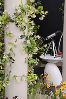 Fragrant climbing jasmine vine on pillar, with telescope of table for night sky viewing in garden