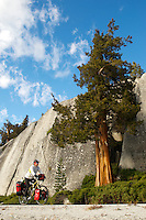 gMack pedals by a Western Juniper Tree  - Yosemite National Park - Adventure Cycling Sierra Cascades Route - Canada to Mexico Cycling Expedition
